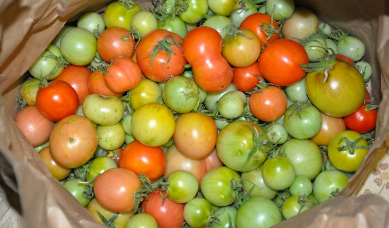 Brown paper bag with some green tomatoes and some red tomatoes
