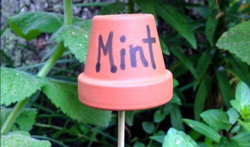 Mint flower pot garden marker for backyard garden
