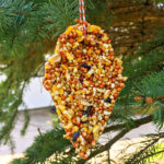Close up of homemade bird feeder in a tree