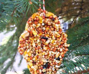 Birds Love this Peanut Butter Free DIY Bird Feeder