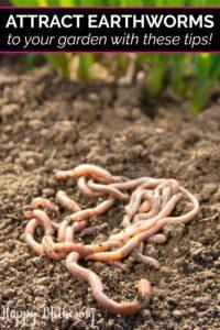 A pile of earthworms in a backyard garden
