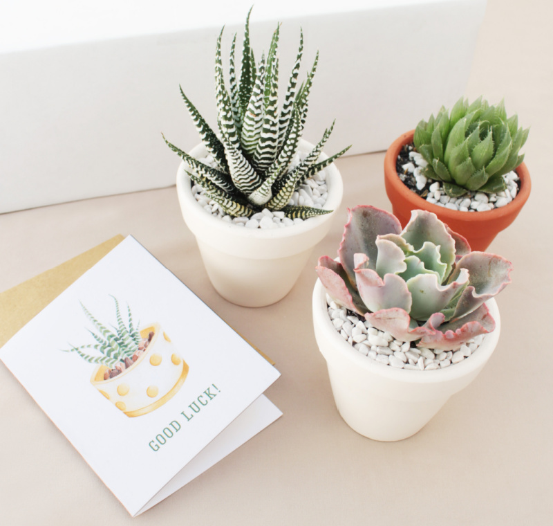 Three succulents in pots next to a card that came in the subscription box.